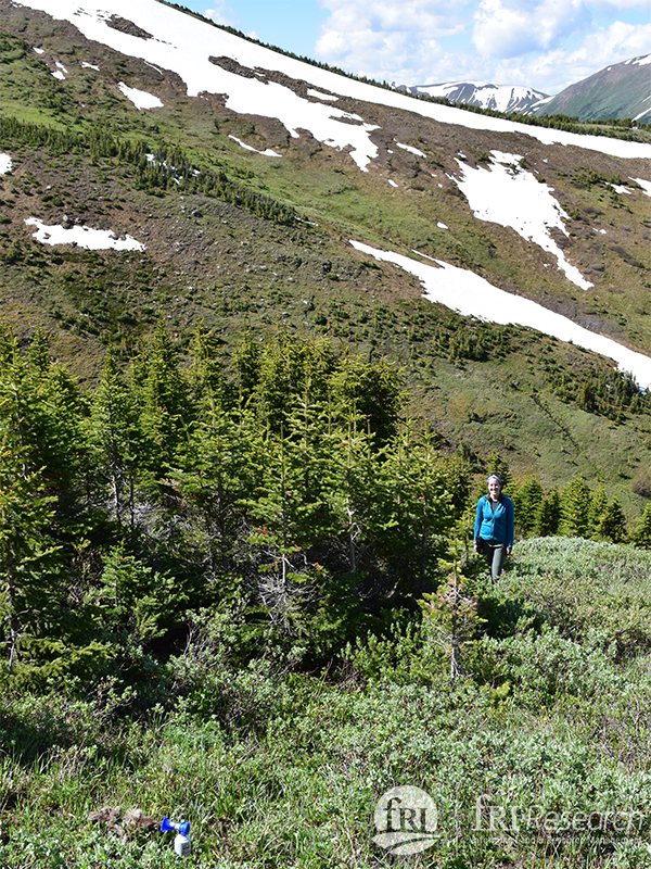 Good weather finally allowed Laura and Doug to reach the mortality site on a remote mountainside.