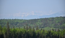 Foothills landscape with mountain pine beetle attack.