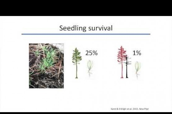 J. Karst: Rehab of beetle-killed stands by improving their associations with mycorrhizal fungi