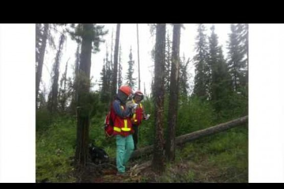 E. Macdonald: Beyond beetle-Lodgepole pine regeneration after MPB outbreaks in AB