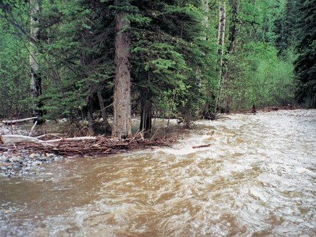 Watershed Resiliency and Restoration Program: East Slopes Riparian Assessment