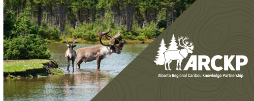 Alberta Regional Caribou Knowledge Partnership