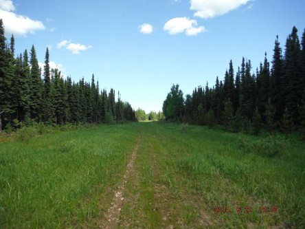 Analysis and improvement of linear features to increase caribou functional habitat in west-central and north-western Alberta