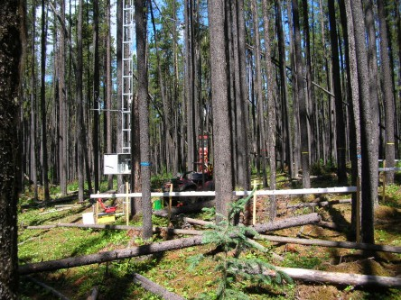 Development of monitoring tools to detect mountain pine beetle at low densities on the eastern and northern edge of beetle expansion into Saskatchewan and NWT