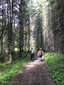 2 people walking on a forest path