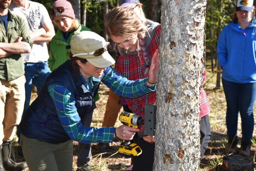 Attaching a trailcam to a tree. These are common tools for wildlife research.