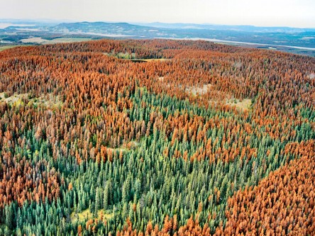 Assessing Community Resilience to Mountain Pine Beetle Outbreaks in Alberta