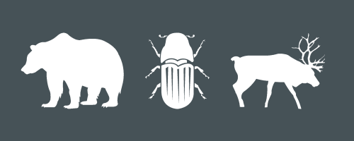 Caribou and Grizzly Bear Response to Pine Forests Killed by  Mountain Pine Beetle