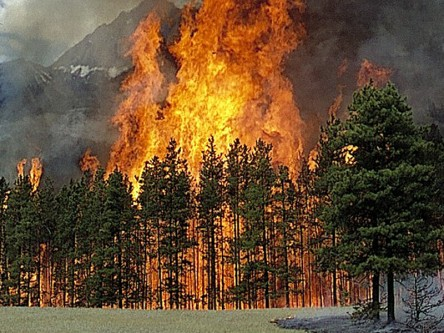 OnFire Annotated Fire Research Database