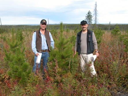 Regenerated Lodgepole Pine Project