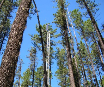 Comparison of understory burning and mechanical site preparation to regenerate lodgepole pine stands killed by MPB
