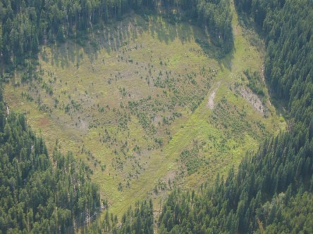 Research and applied tools to enhance forest management linkages to Grizzly Bear conservation and recovery in Alberta