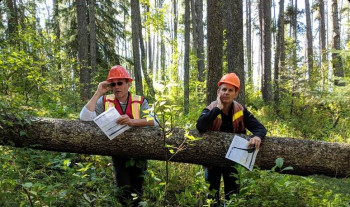 2 men in hard hats holding papers leaning against a large fallen tree