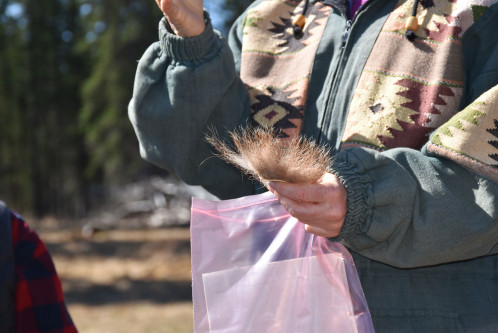 Comparison of grizzly bear hair-snag and scat sampling along roads to inform wildlife population monitoring
