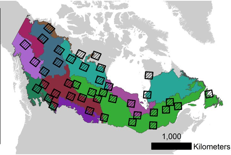 Evolution Of Canada S Boreal Forest Spatial Patterns As Seen From