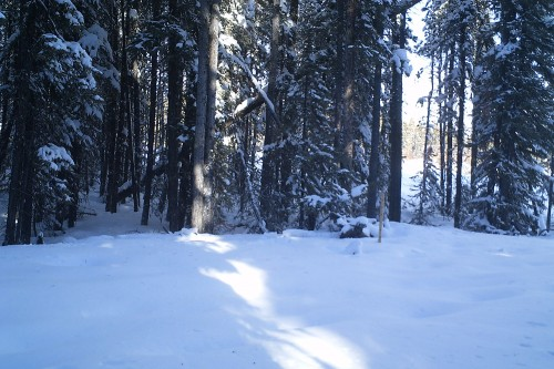 Trail camera picture of snow and a snowstake