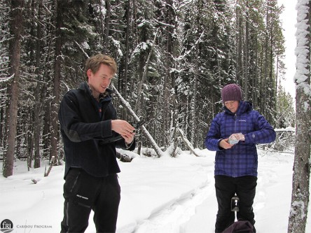 Doug and Kelsey setup trail cameras in the Little Smoky caribou range