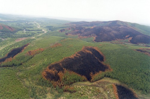 Aerial photo of brunt patches from 1997.