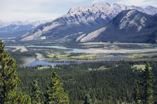 Athabasca valley in Jasper National Park