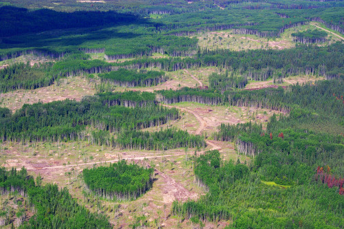 Aerial photo of forestry harvest with retention practices.