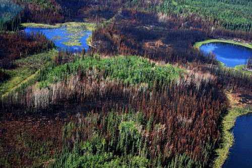 Aerial view of a burned area among lakes