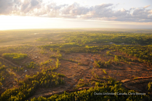 Aerial shot of mixedwood boreal forest, recently cut with many residuals.