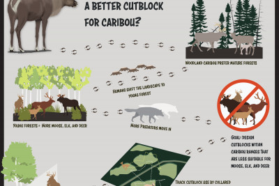 Infographic about the cutblock design project