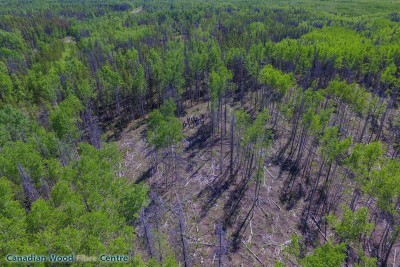 UAV shot of the group. Photo credit: Brent Joss, Natural Resources Canada: Canadian Wood Fibre Centre.
